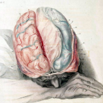 Research Shows That Depression Can Damage Parts of the Brain